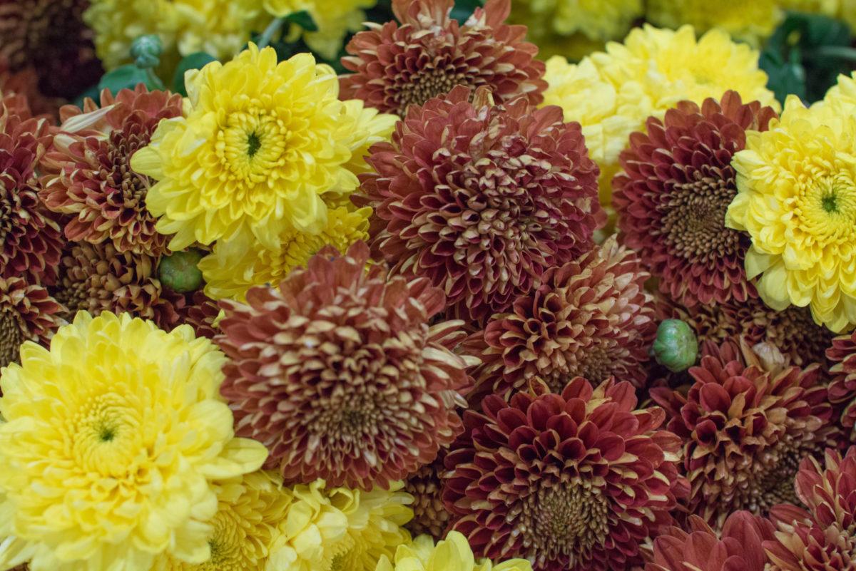 New Covent Garden Flower Market October 2016 Market Report Flowerona Hr A 1
