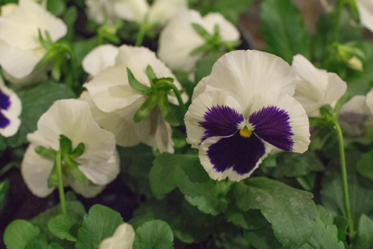 New Covent Garden Flower Market October 2016 Market Report Flowerona Hr A 12