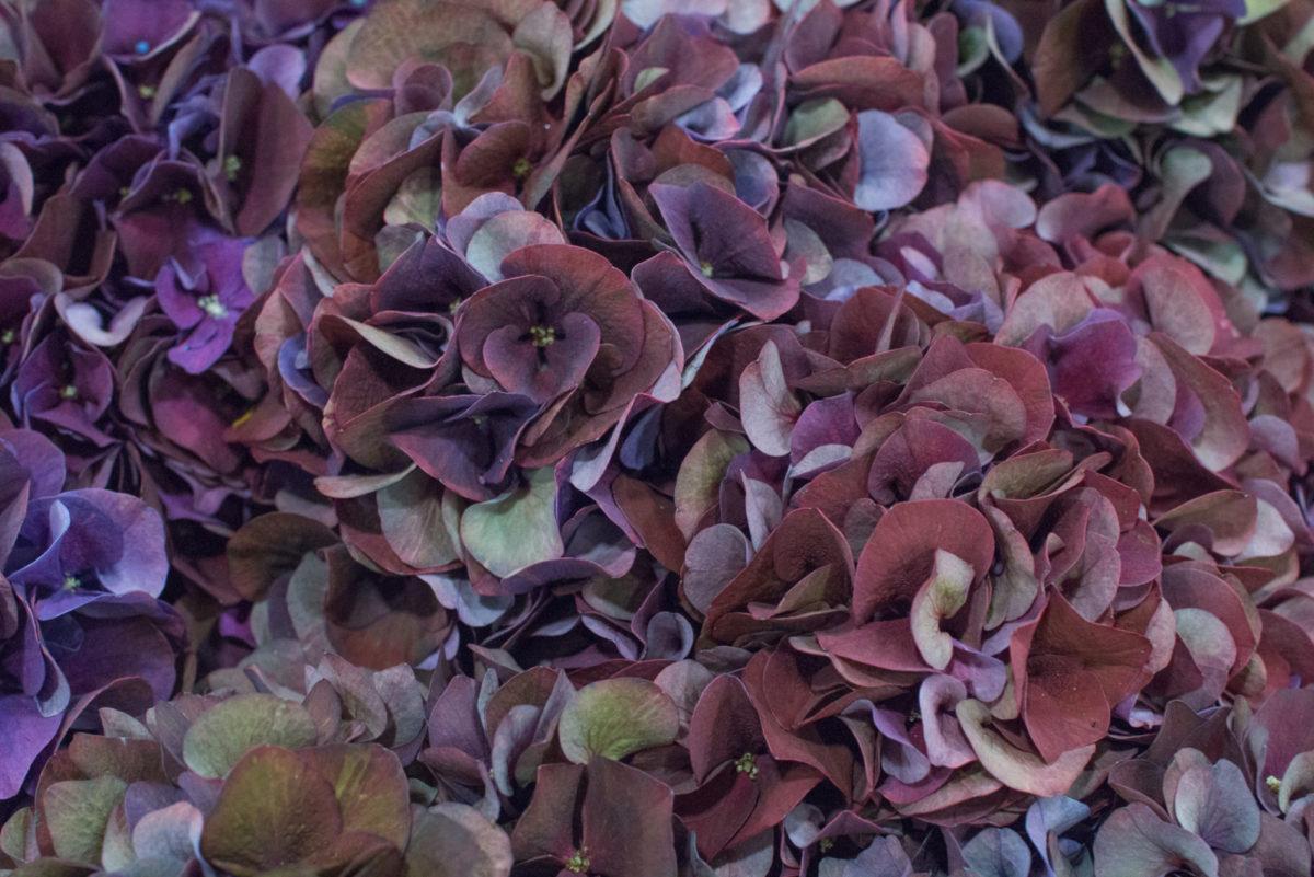 New Covent Garden Flower Market October 2016 Market Report Flowerona Hr A 18