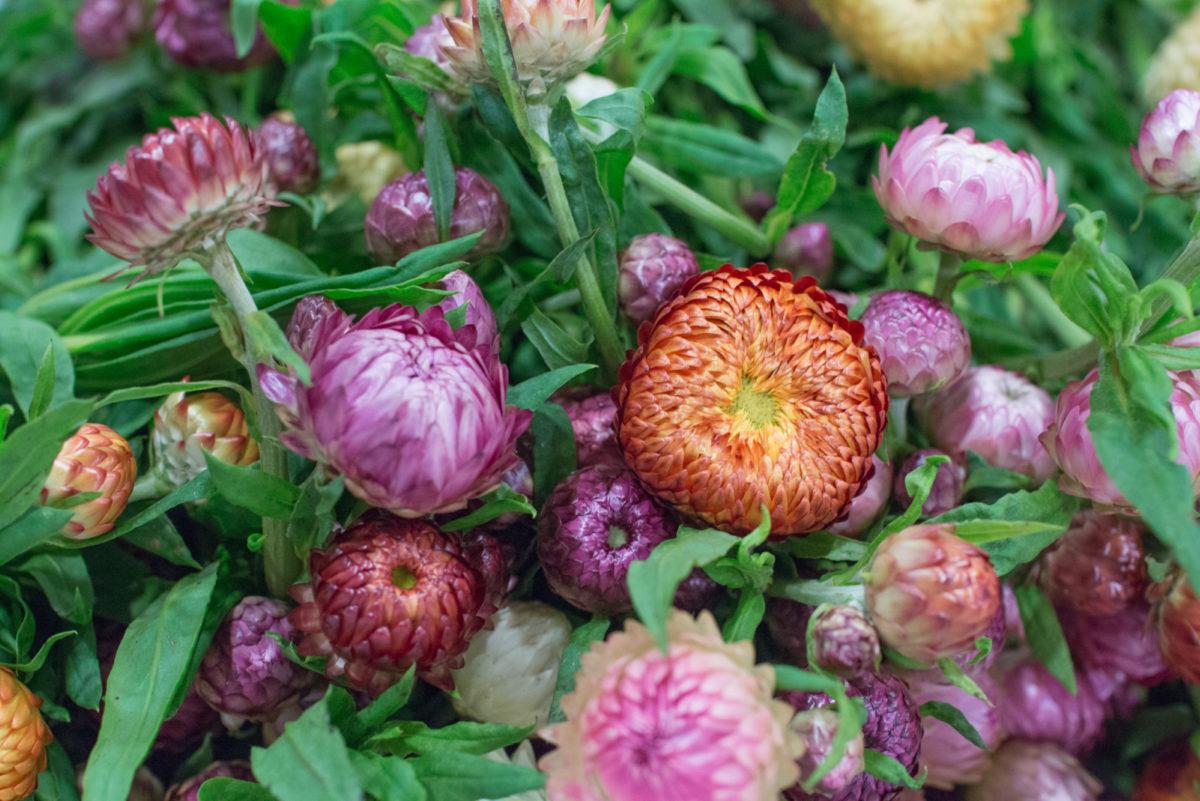 New Covent Garden Flower Market October 2016 Market Report Flowerona Hr A 2