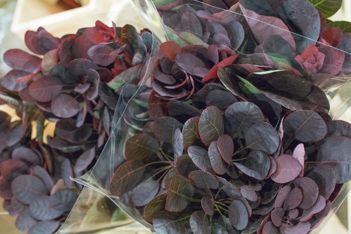 New Covent Garden Flower Market October 2016 Market Report Flowerona Hr A 20