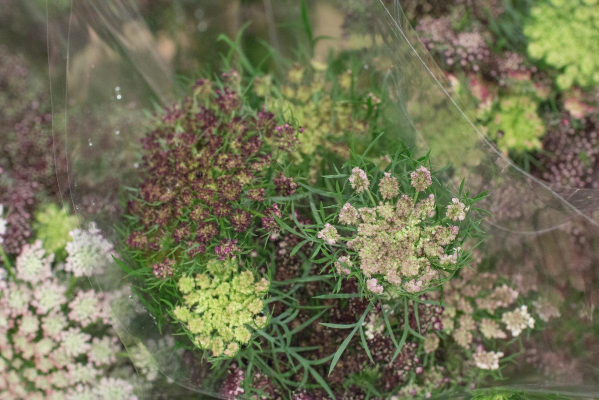New Covent Garden Flower Market October 2016 Market Report Flowerona Hr A 21