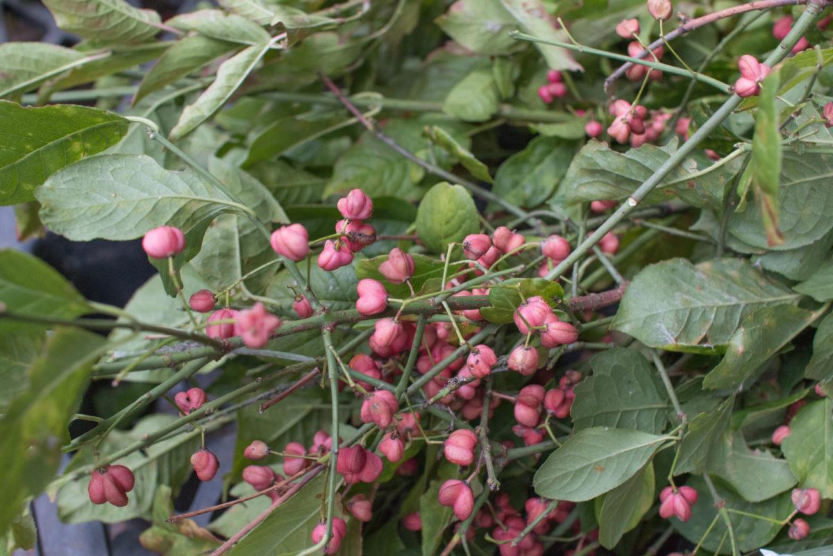 New Covent Garden Flower Market October 2016 Market Report Flowerona Hr A 24