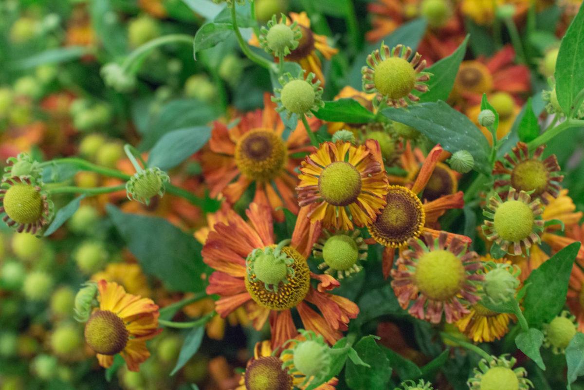 New Covent Garden Flower Market October 2016 Market Report Flowerona Hr A 33