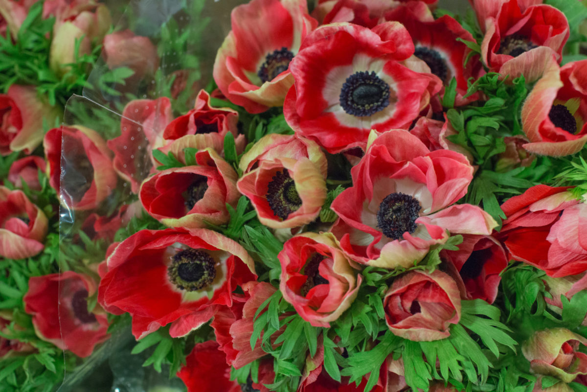 New Covent Garden Flower Market October 2016 Market Report Flowerona Hr A 36