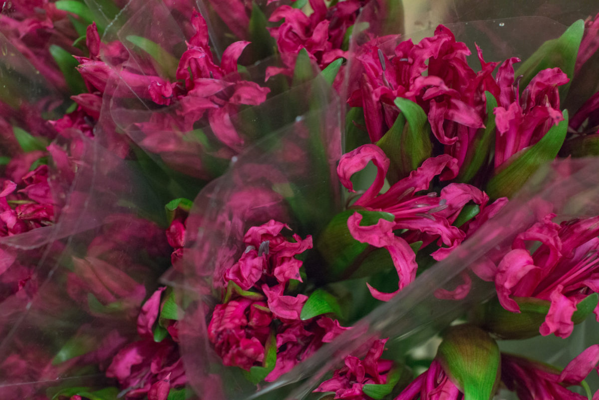 New Covent Garden Flower Market October 2016 Market Report Flowerona Hr A 38
