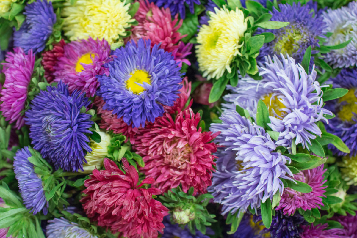 New Covent Garden Flower Market September 2016 Market Report Flowerona Hr A 4