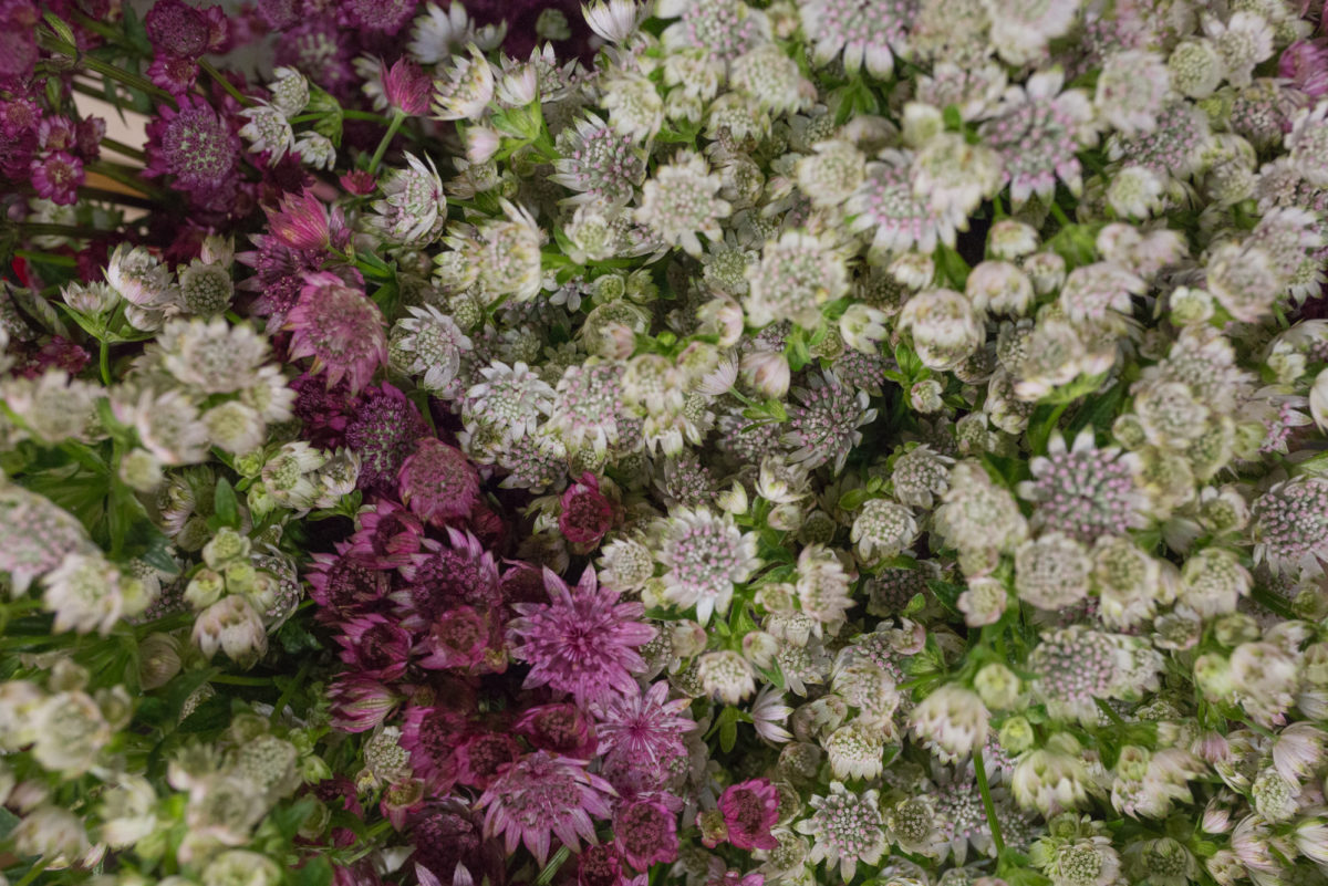 New Covent Garden Flower Market September 2017 Flower Market Report Rona Wheeldon Flowerona British Astrantia At Zest Flowers 2