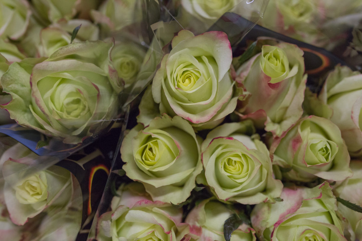 New Covent Garden Flower Market September 2017 Flower Market Report Rona Wheeldon Flowerona Fairway Roses At Dennis Edwards Flowers 17