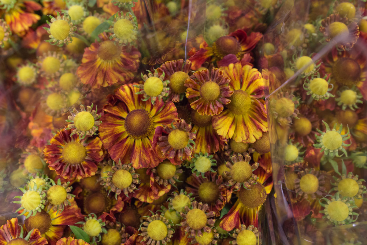 New Covent Garden Flower Market September 2017 Flower Market Report Rona Wheeldon Flowerona Helenium Ôçÿ Autumn Fireôçö At Zest Flowers 10