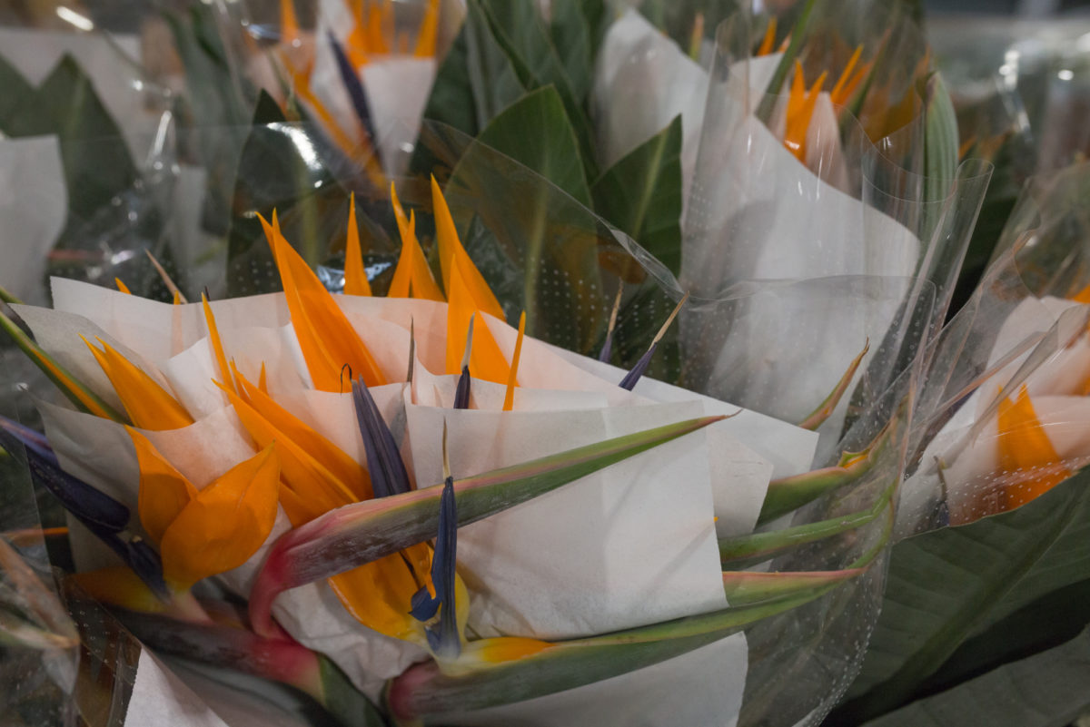 New Covent Garden Flower Market September 2017 Flower Market Report Rona Wheeldon Flowerona Strelitzia Bird Of Paradise At D G Wholesale Flowers 11