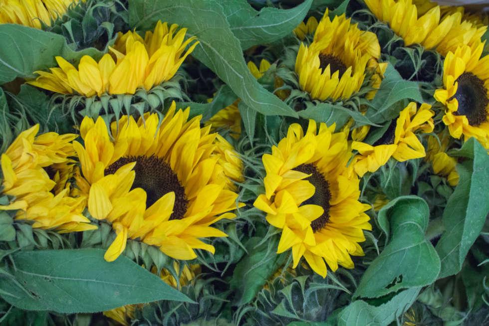 October's Flower Market Report