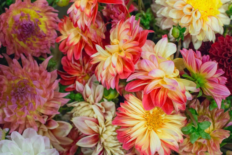 September's Flower Market Report