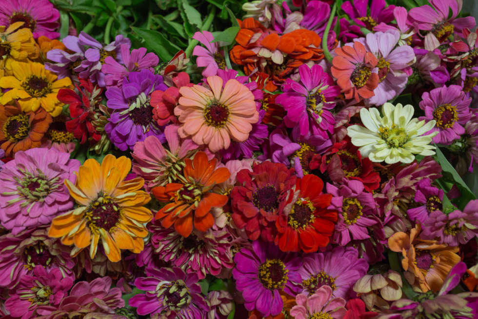 In season at the Flower Market this September