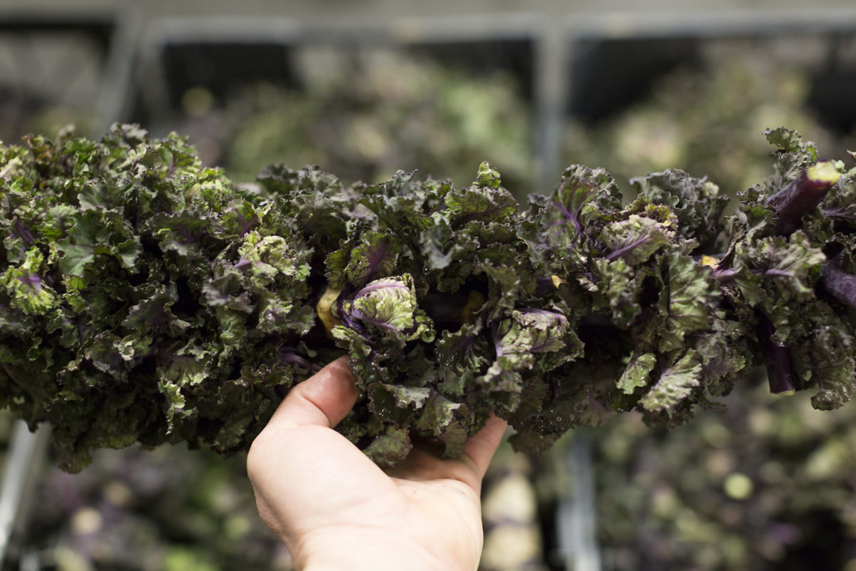 Fruit And Veg Market Report February 2017 Flower Sprouts