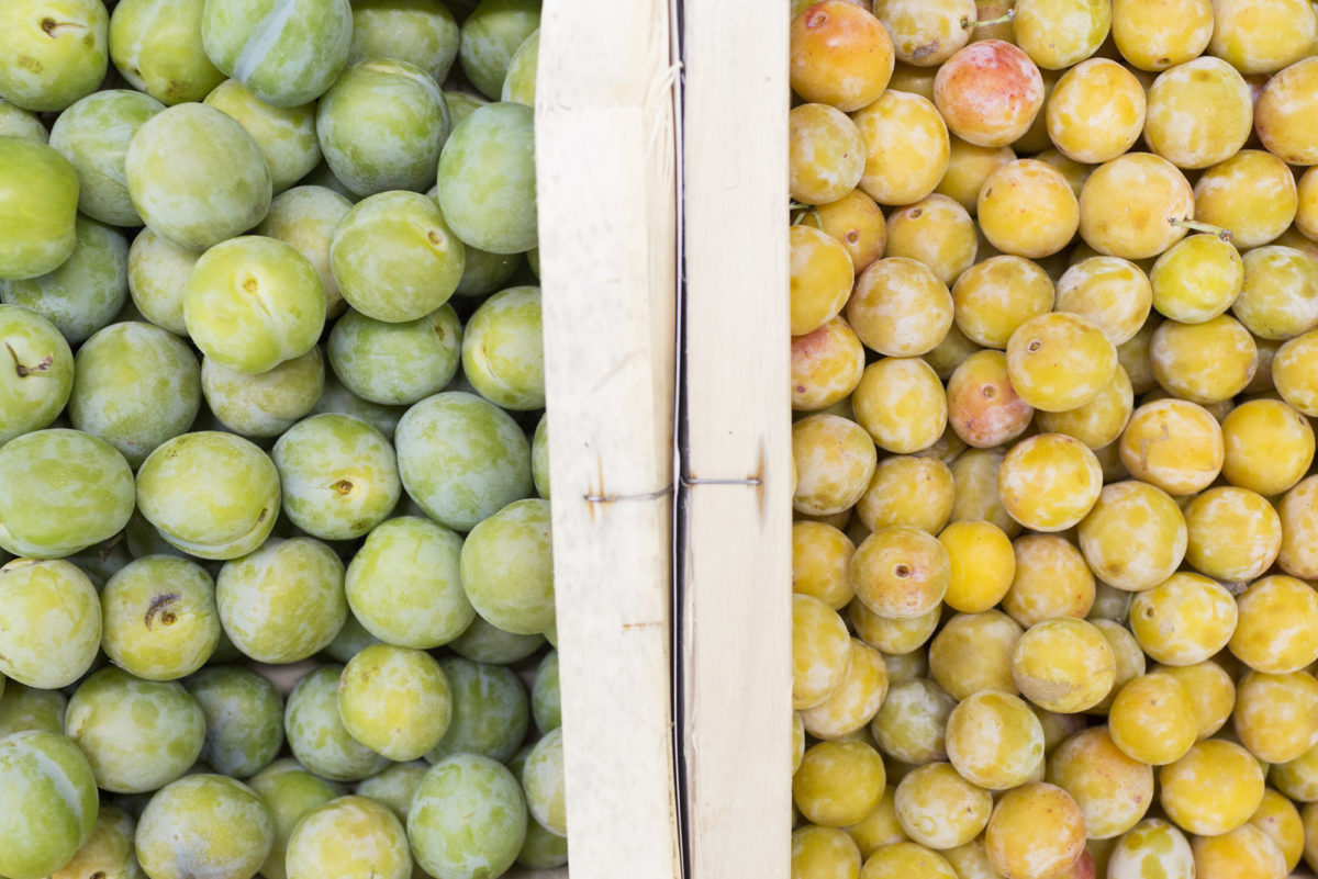 Fruit And Veg Market Report October 2016 Plums