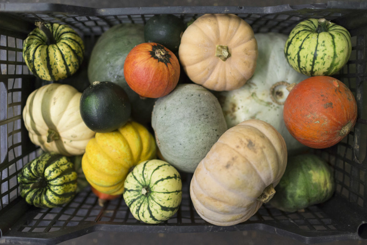 Fruit And Veg Market Report October 2016 Squashes