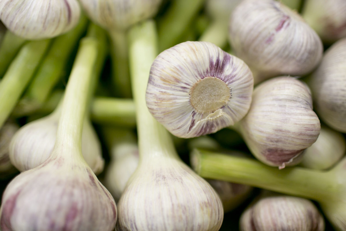Fruit And Vegetable Market Report April 2015 Wet Garlic