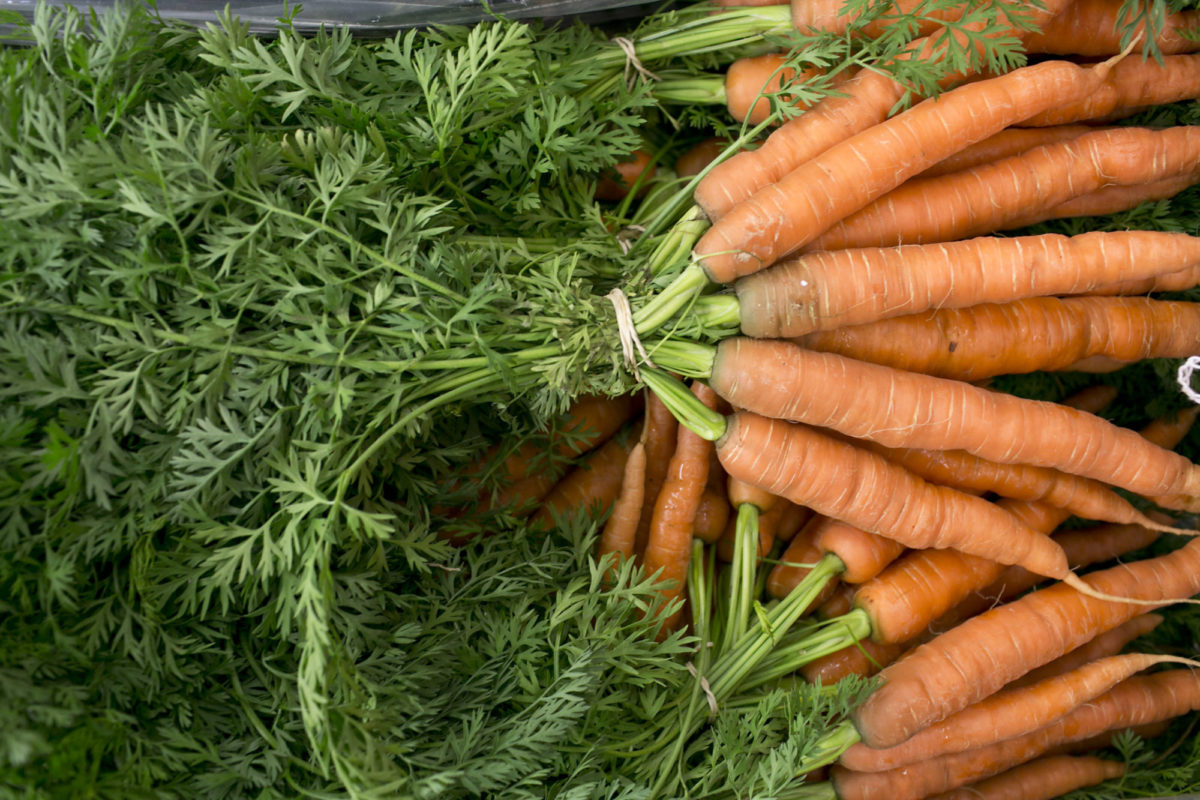Fruit And Vegetable Market Report August 2014 Carrots