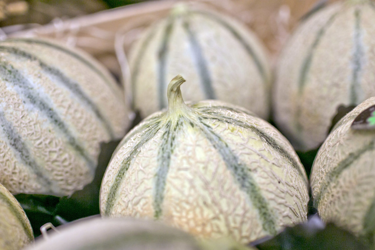 Fruit And Vegetable Market Report August 2014 Charentais Melons