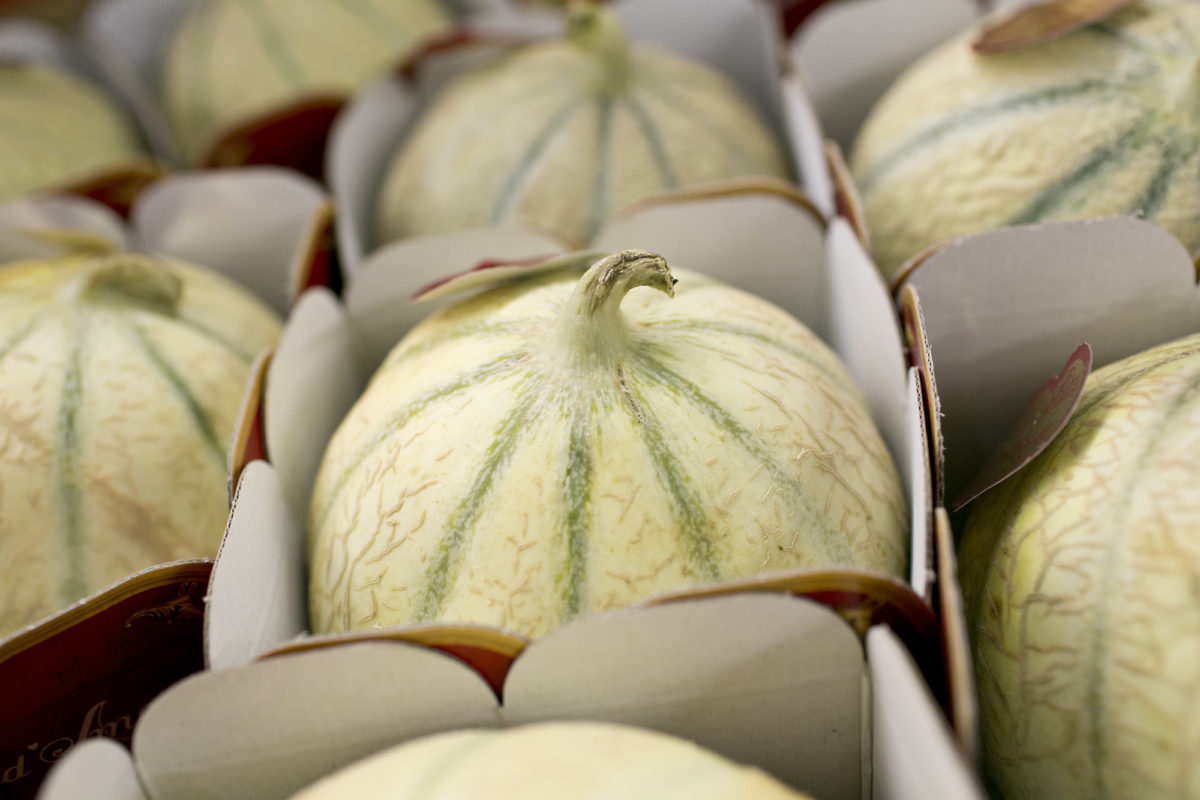 Fruit And Vegetable Market Report August 2015 Melons