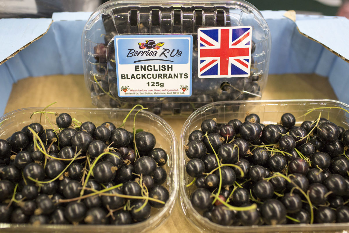 Fruit And Vegetable Market Report August 2016 Blackcurrants