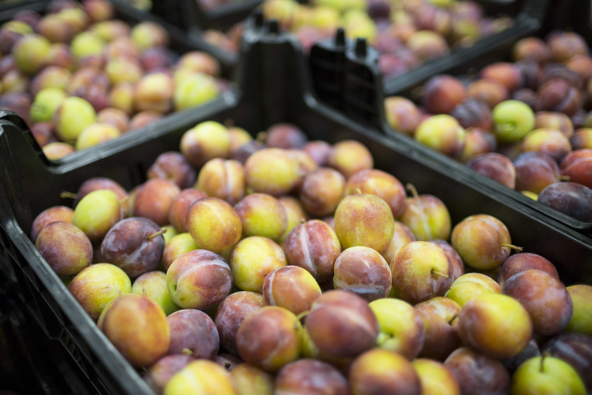 Fruit And Vegetable Market Report August 2016 Opal Plums
