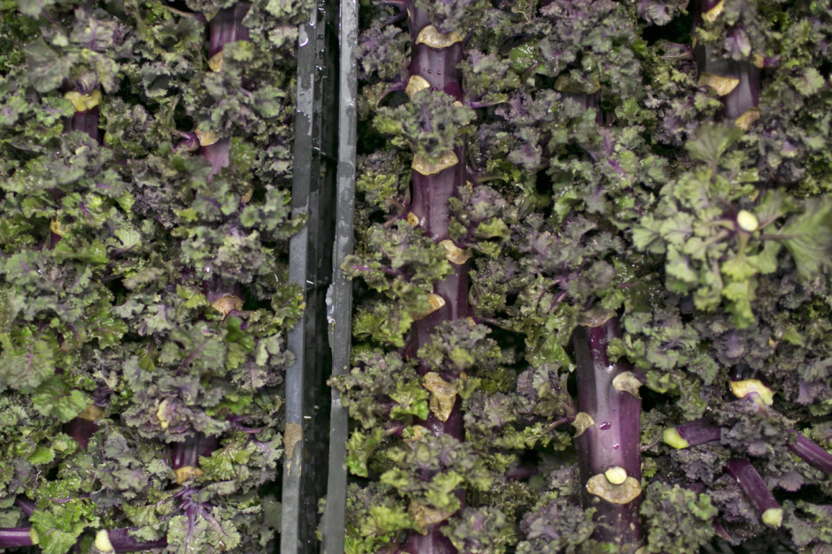 Fruit And Vegetable Market Report February 2015 Flower Sprouts