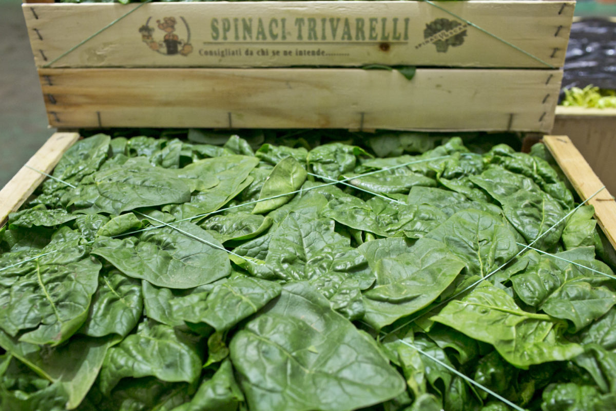 Fruit And Vegetable Market Report February 2015 Spinach