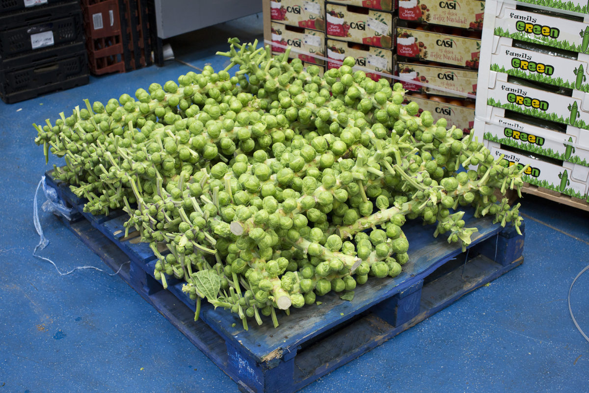 Fruit And Vegetable Market Report January 2017 Brussel Sprouts