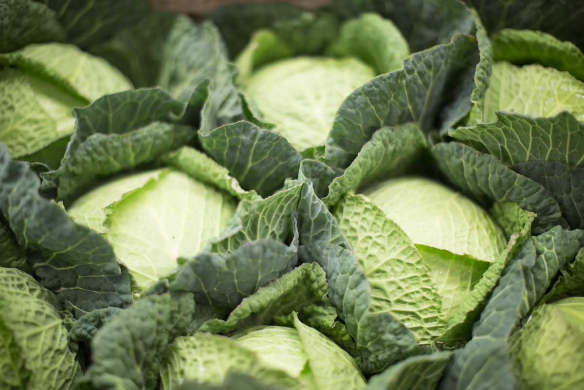 Fruit And Vegetable Market Report January 2017 Savoy Cabbage