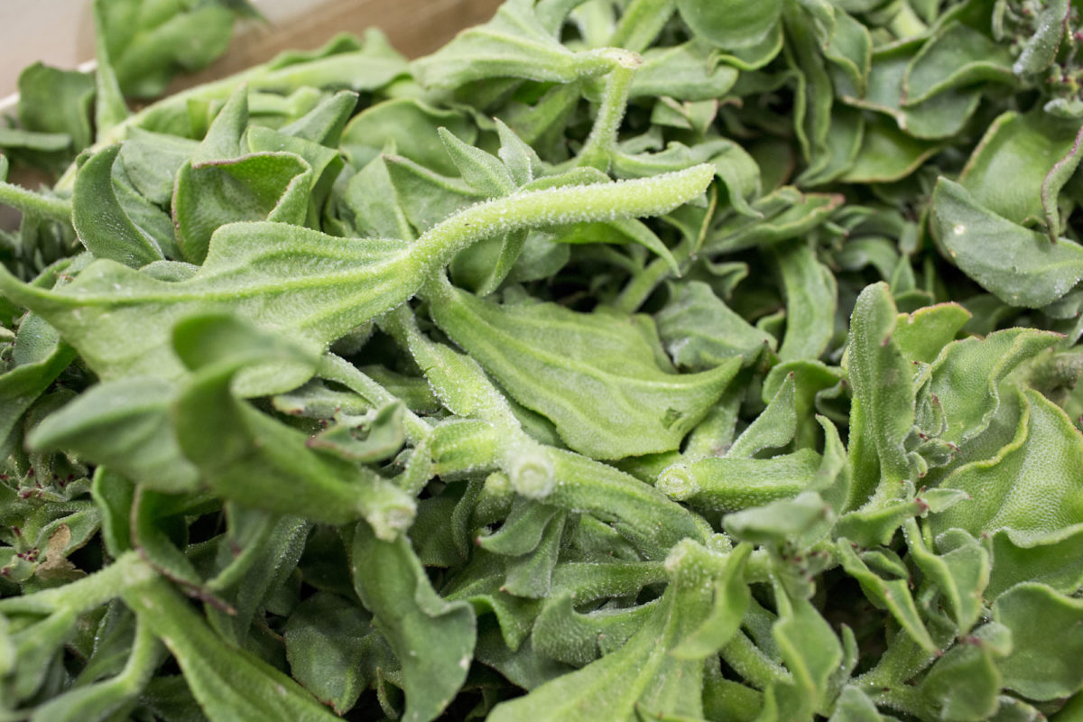 Fruit And Vegetable Market Report July 2014 Iceplant