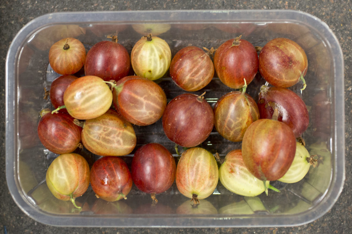 Fruit And Vegetable Market Report July 2014 Red Gooseberries