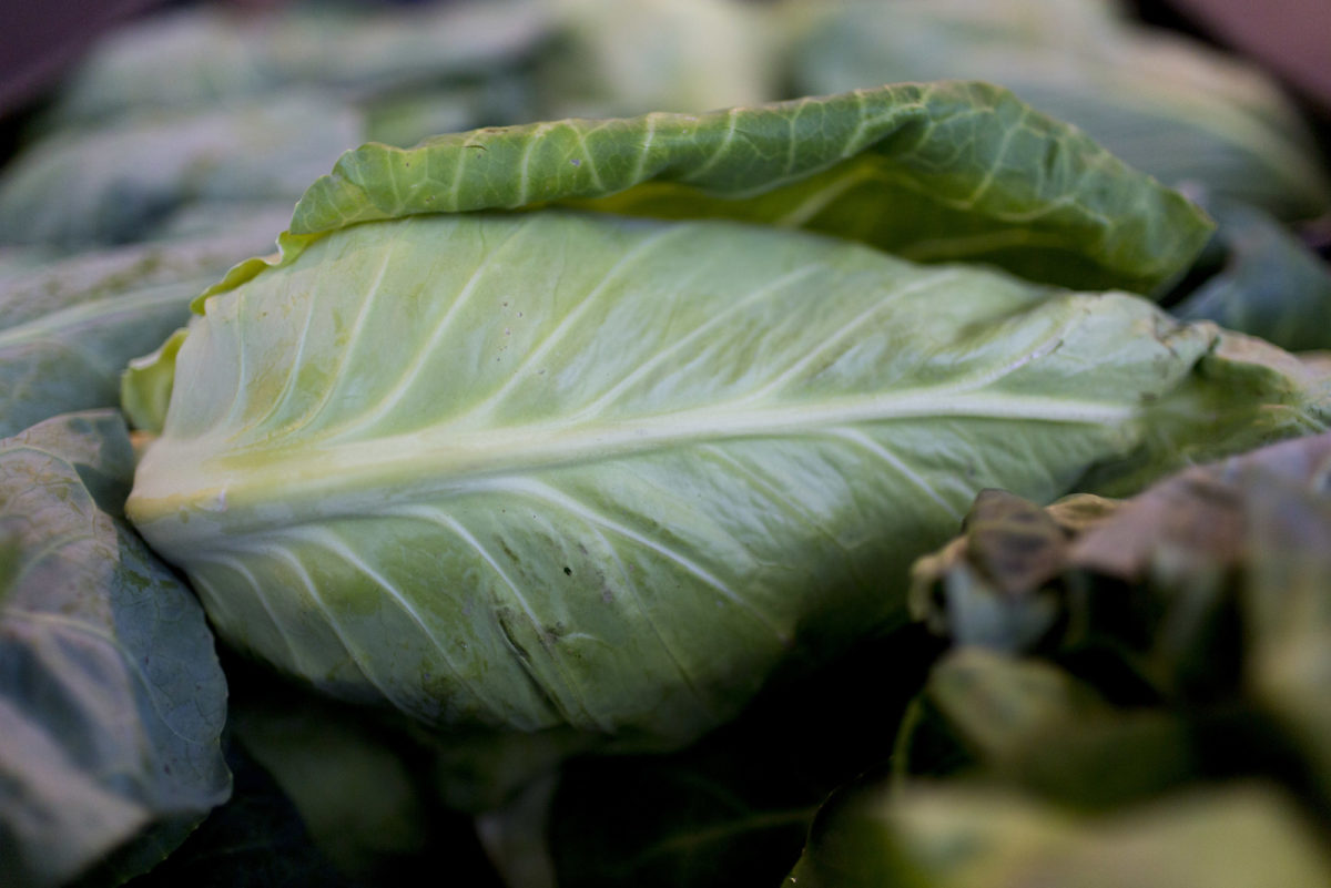 Fruit And Vegetable Market Report July 2016 Pointed Cabbage