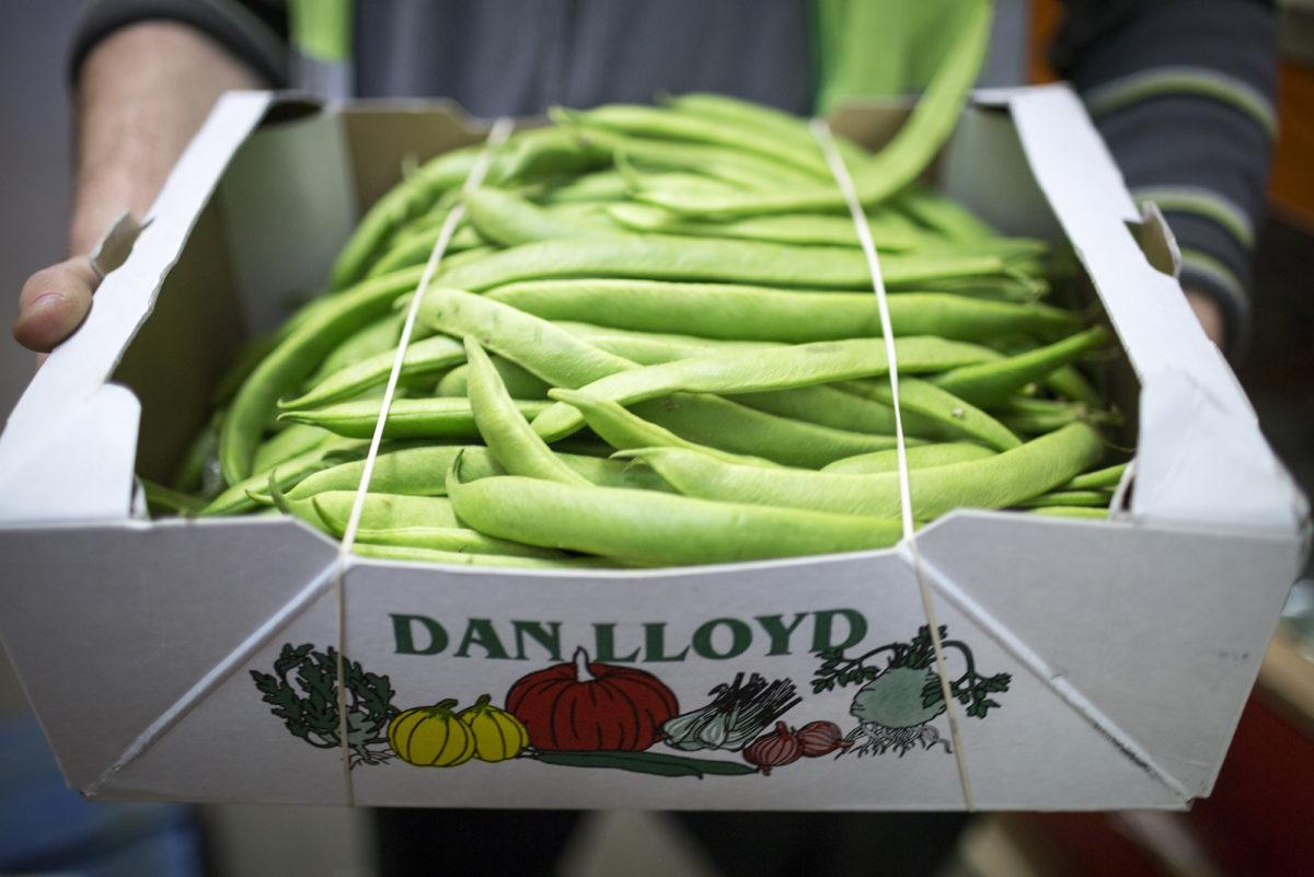 Fruit And Vegetable Market Report July 2016 Runner Beans