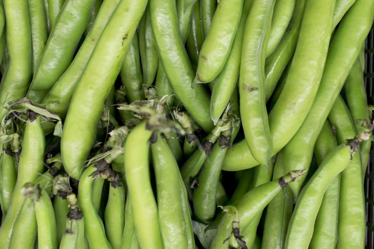 Fruit And Vegetable Market Report June 2015 Broad Beans
