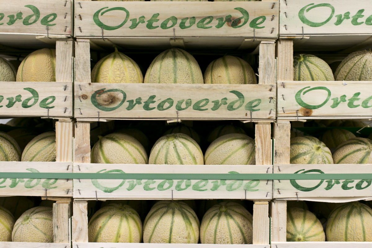 Fruit And Vegetable Market Report June 2015 Melons