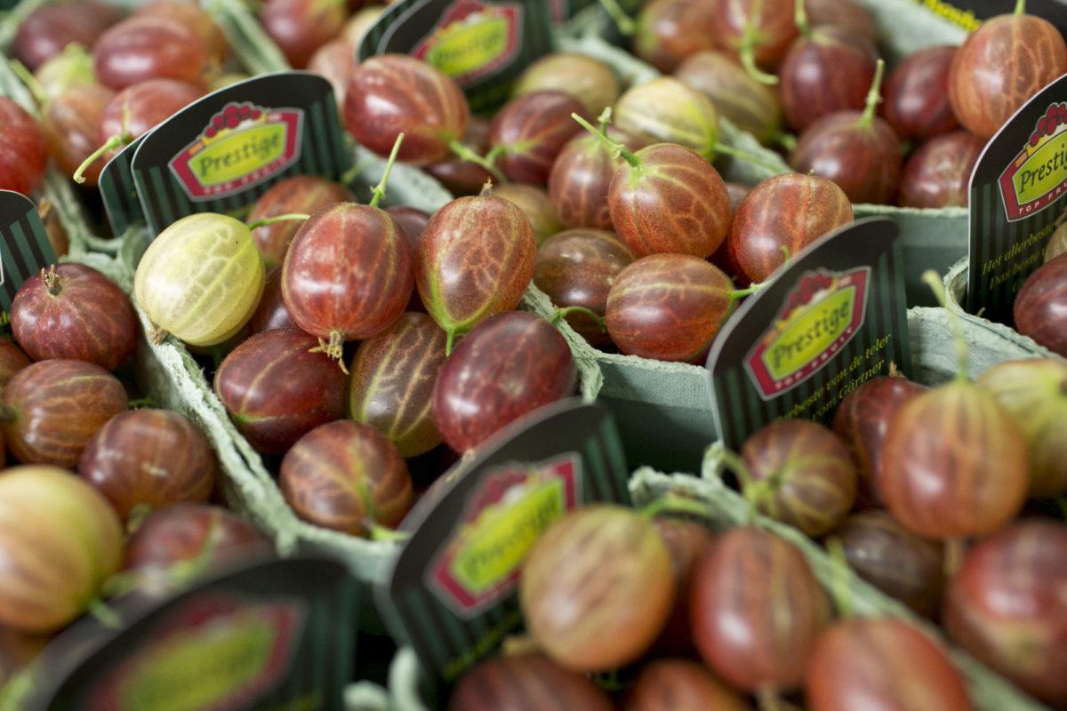 Fruit And Vegetable Market Report June 2015 Red Gooseberries