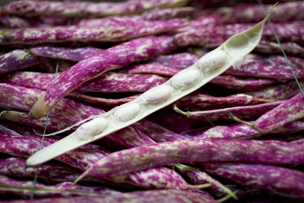 Fruit And Vegetable Market Report June 2016 Borlotti