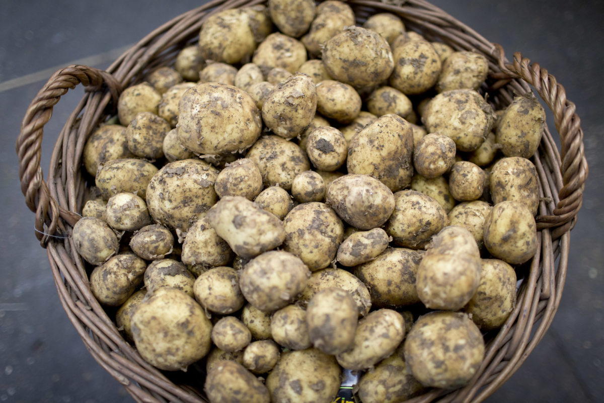 Fruit And Vegetable Market Report June 2016 Potatoes