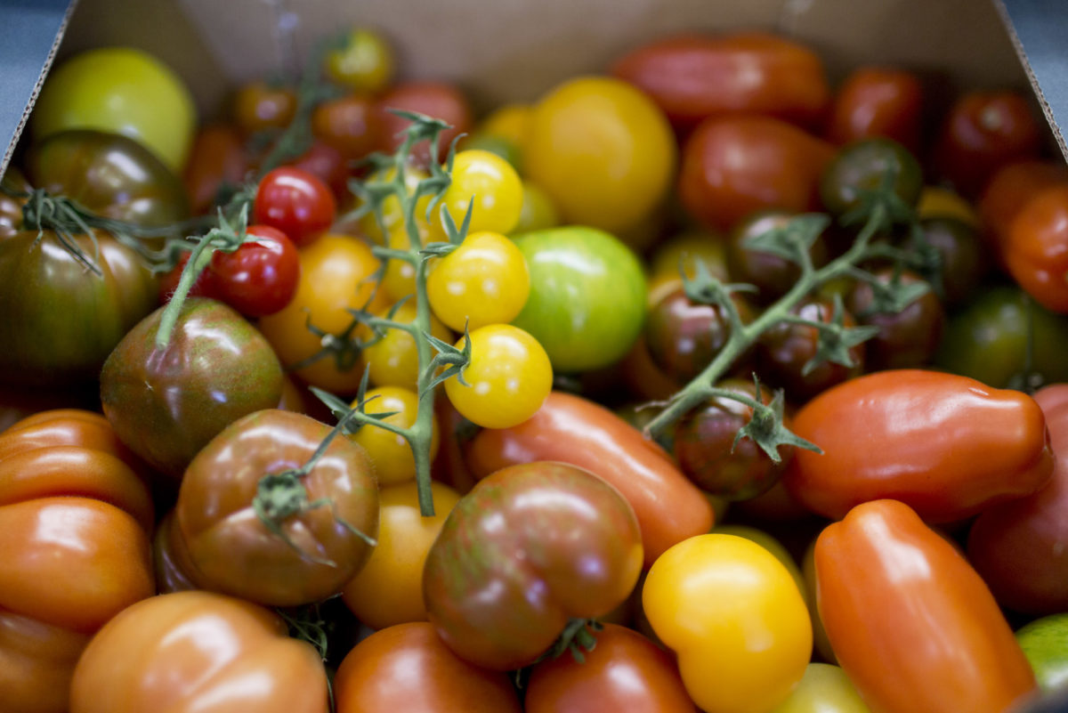 Fruit And Vegetable Market Report June 2016 Tomatoes