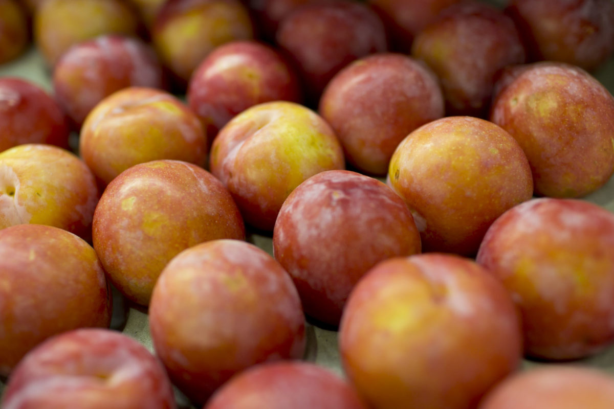 Fruit And Vegetable Market Report March 2015 Plums