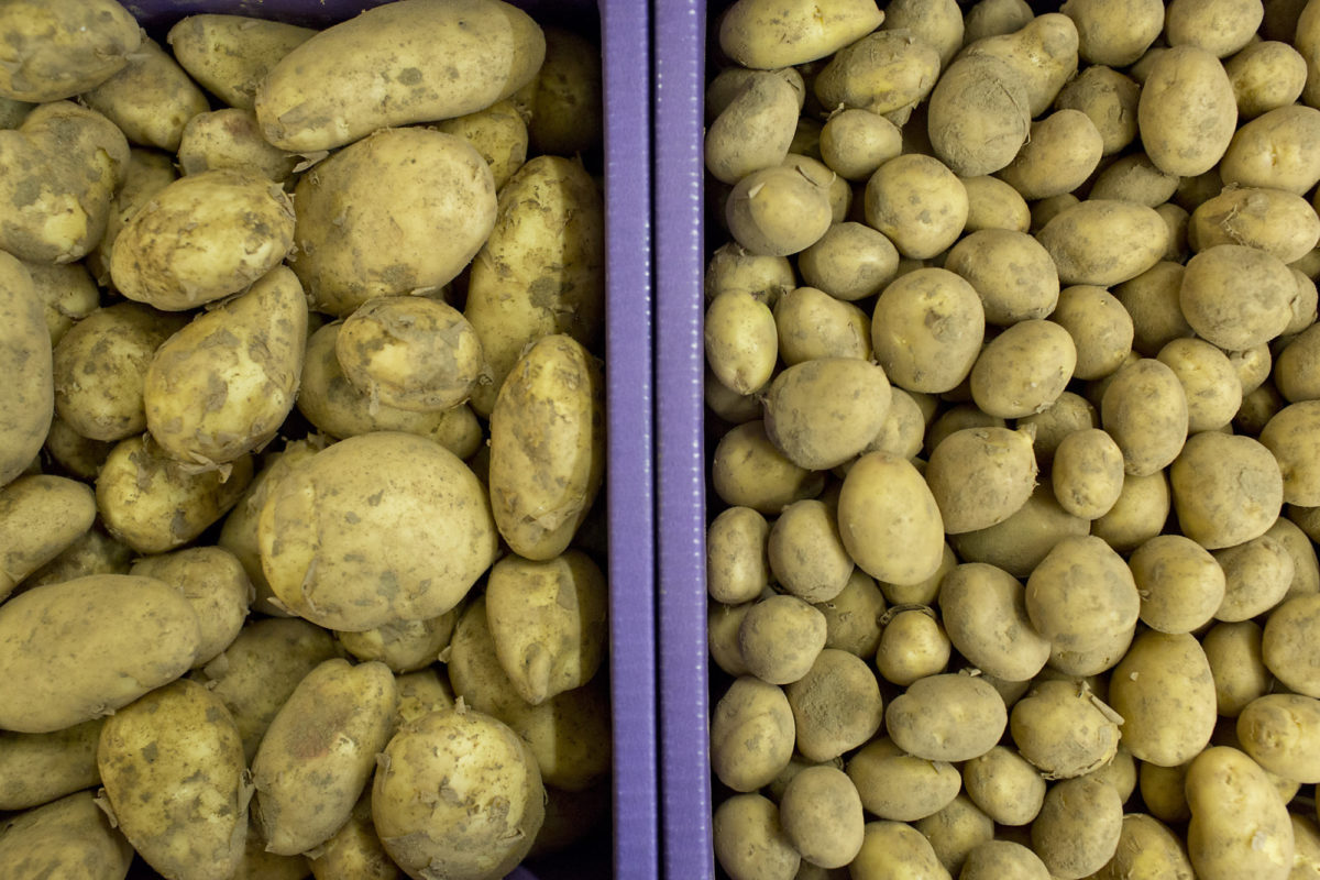 Fruit And Vegetable Market Report March 2016 Jersey Royal Potatoes
