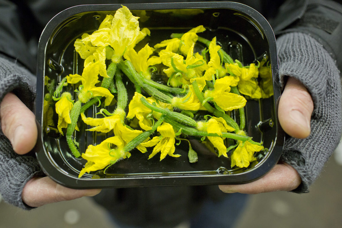 Fruit And Vegetable Market Report May 2014 Cucumber Flowers