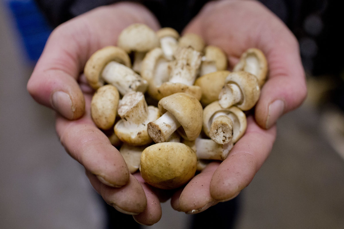 Fruit And Vegetable Market Report May 2014 Saint George Mushrooms