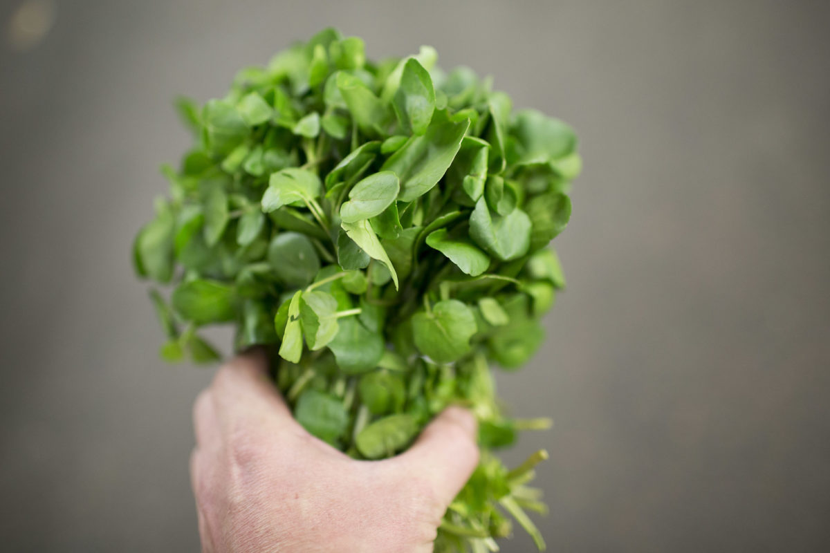Fruit And Vegetable Market Report May 2014 Watercress