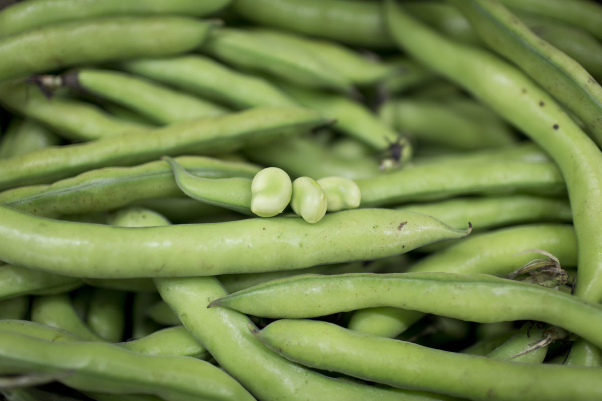 Fruit And Vegetable Market Report May 2015 Broad Beans