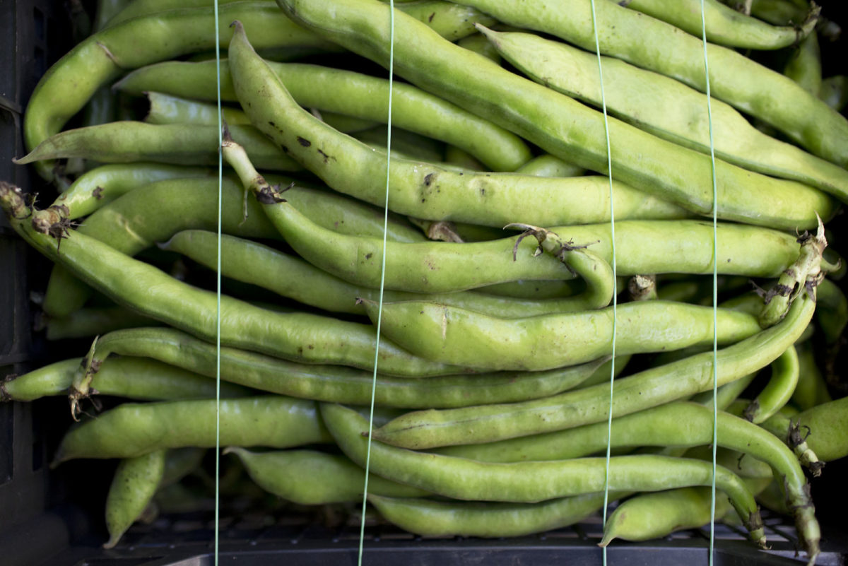 Fruit And Vegetable Market Report May 2016 Broad Beans