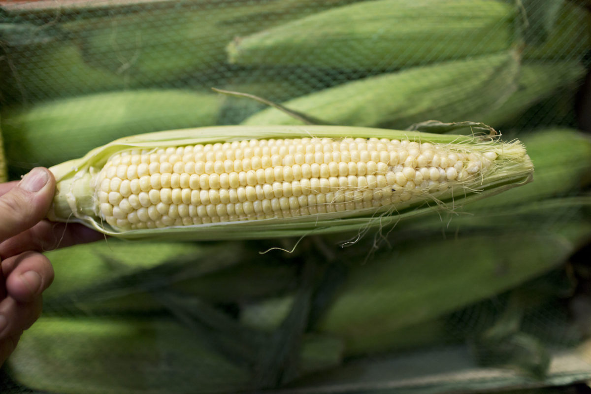 Fruit And Vegetable Market Report May 2016 Sweetcorn