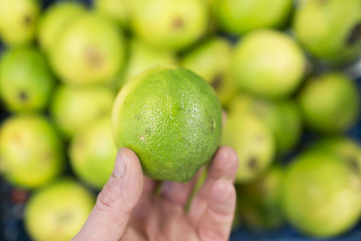 Fruit And Vegetable Market Report November 2015 Bergamot